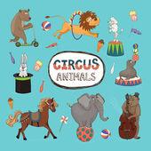 Fotografie vektorové sada barevné cirkusových zvířat