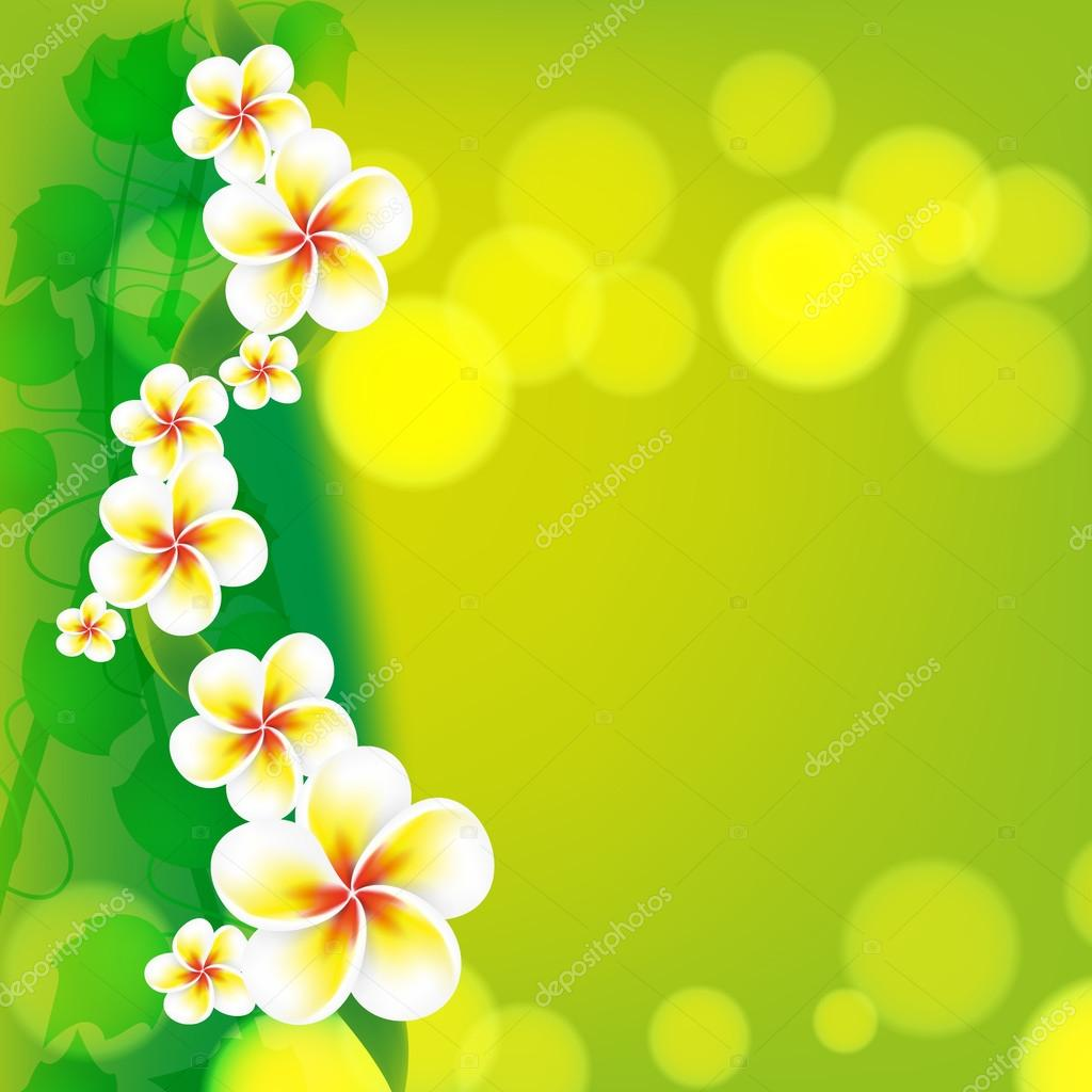 Frangipani flowers on green background