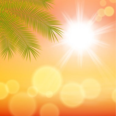 Sunny background with palm leaves.