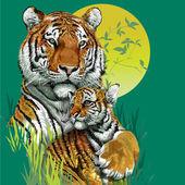 Fotografie Tiger family in jungle.