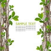 Fotografie zelené listí rám