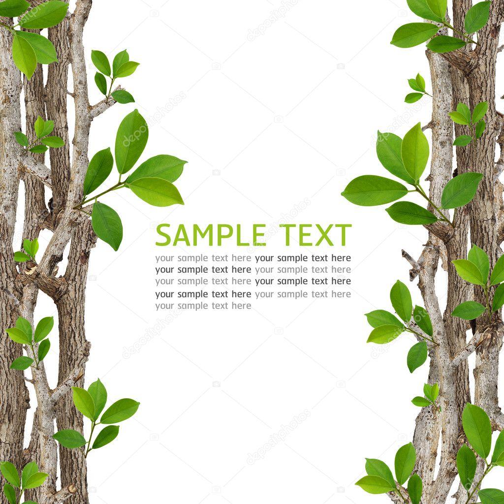 Green leaf frame