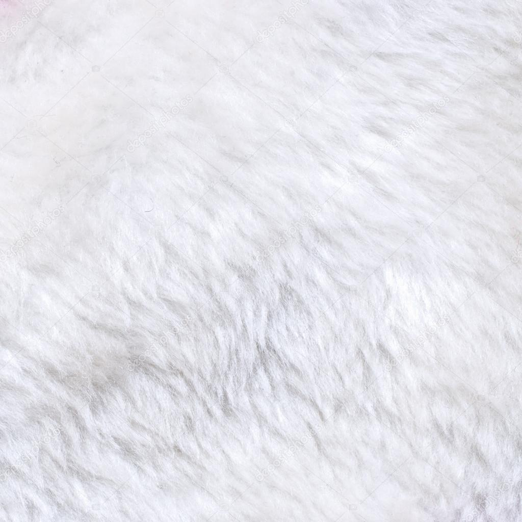 White Fur Texture Stock Photo 169 Ccat82 19951175