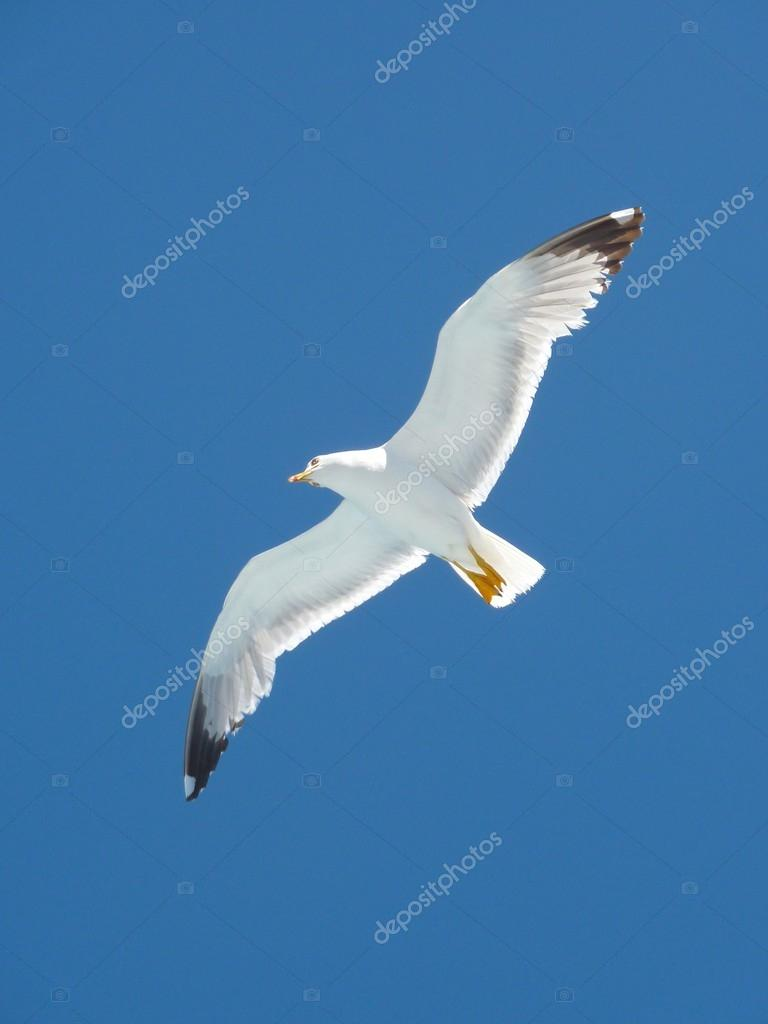 Seagulls flying over  the sea into a blue summer sky