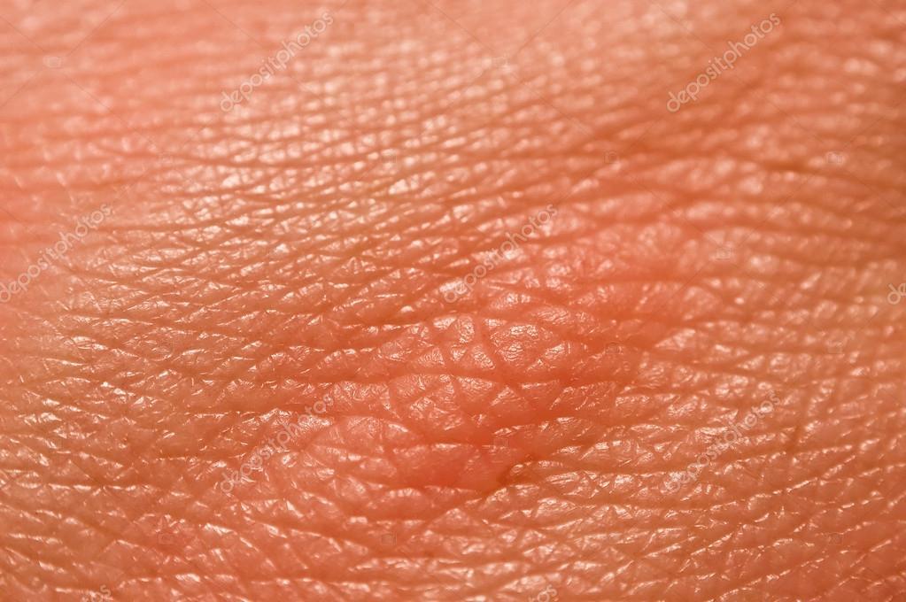 skin macro stock photos images pictures human skin macro picture stock photo 169 jugulator 25119063