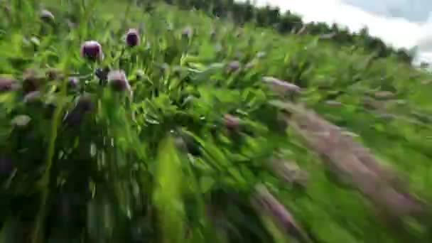 velmi rychle spustit v trávě. rozmazání pohybem. vysoká rychlost