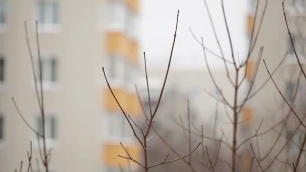 strom, větve a budova na pozadí - pohled z okna