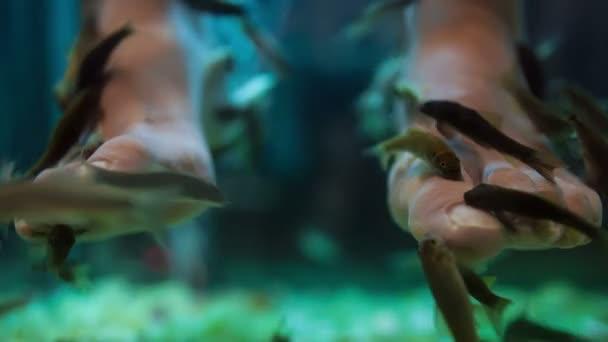 rybí pedikúra wellness pleť péče o lázeňství
