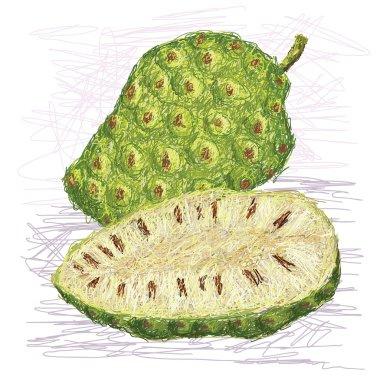 noni fruit cross-section
