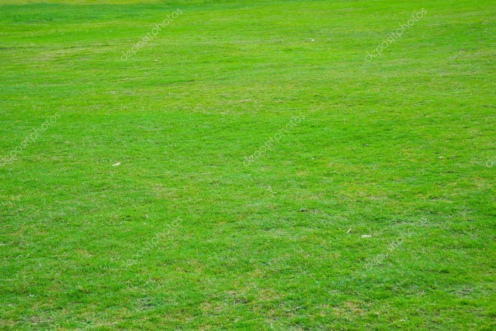 草地 — ストック写真 © roseburn...
