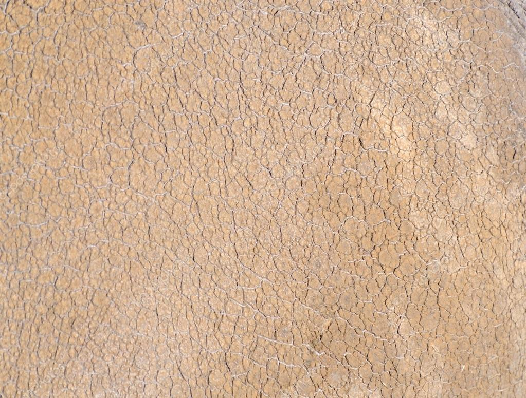 Rhino skin texture — Stock Photo © KMWPhotography #22581681