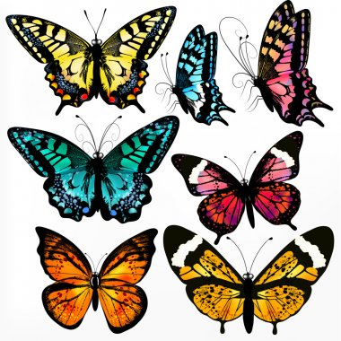 Colorful collection of vector realistic butterflies for design