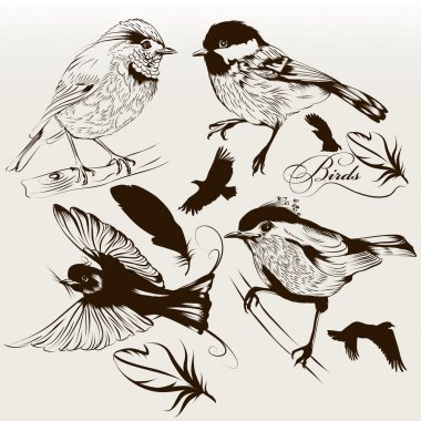 Collection of vector hand drawn birds for design