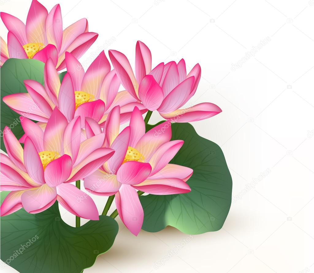 Background with pink vector lotus flowers on a white