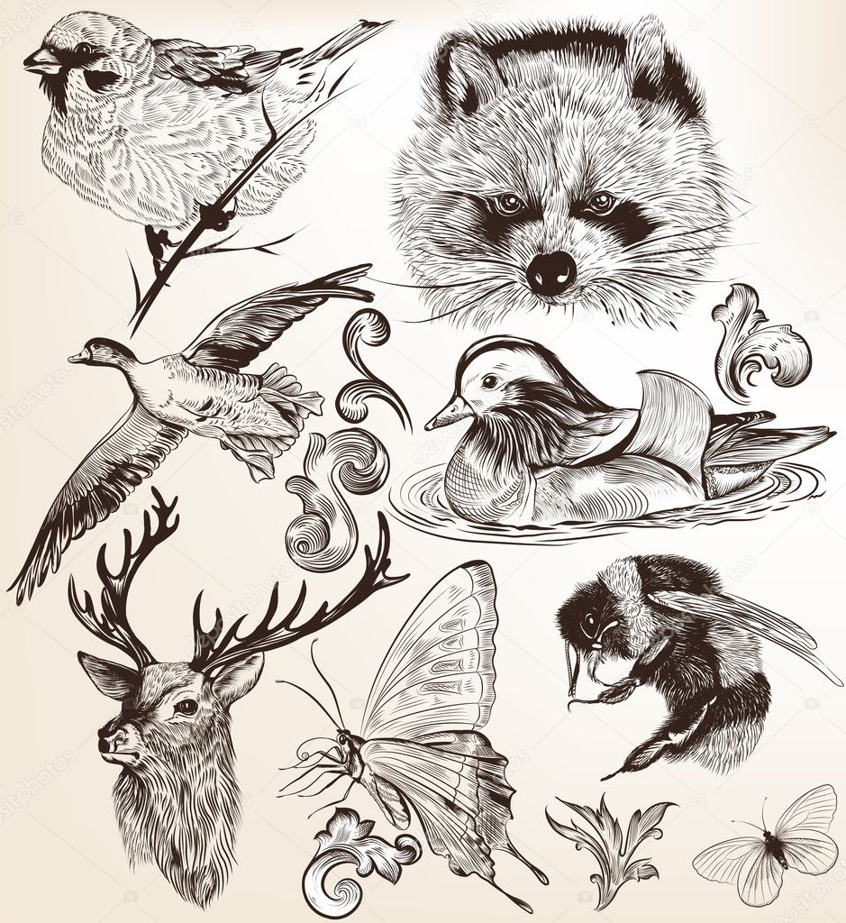 Vector set of detailed hand drawn animals in vintage style