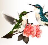 Fotografia cartolina di San Valentino carino con paio di humming bird e Rose