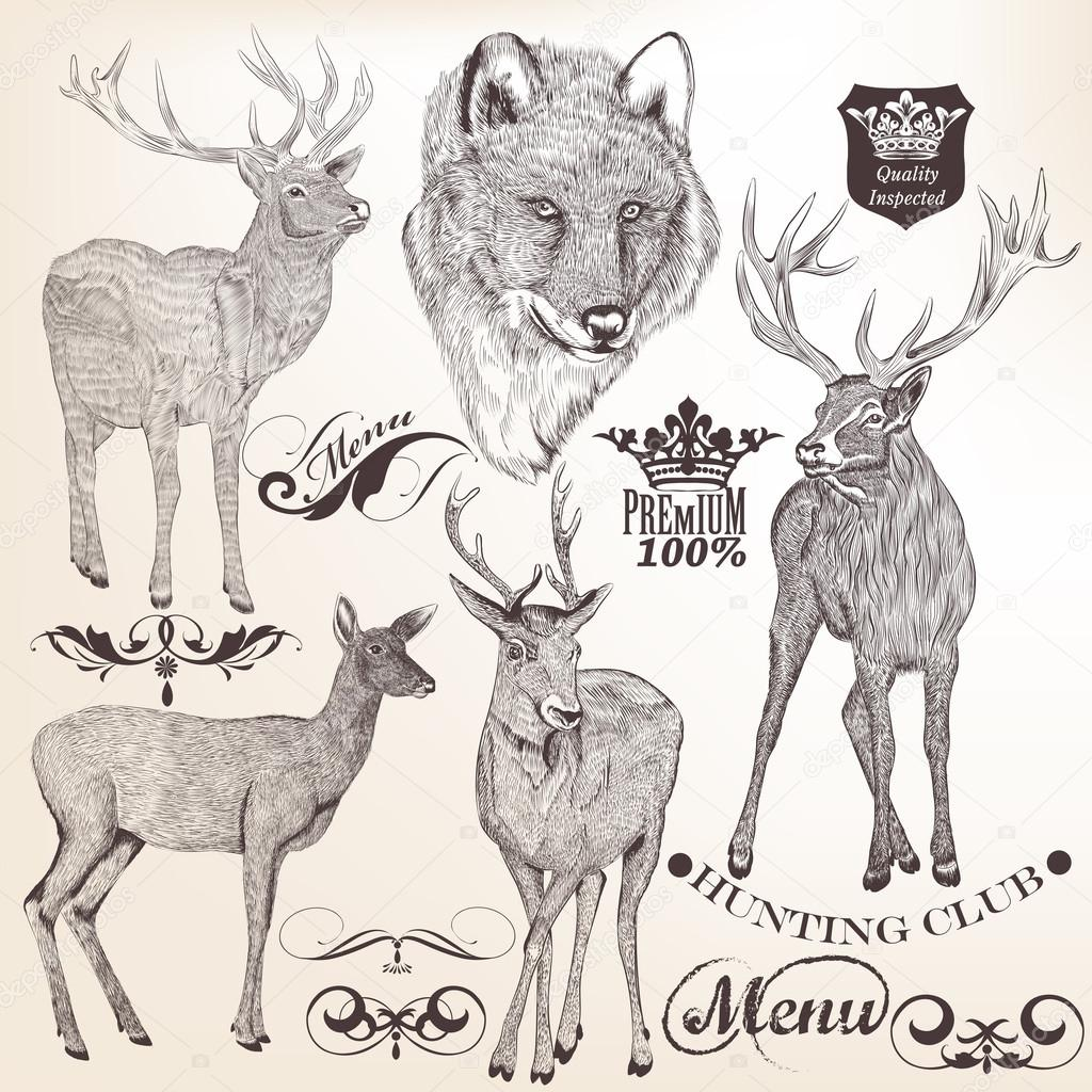 Collection of hand drawn animals for design