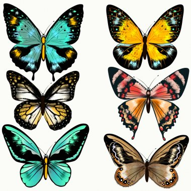 Collection of colorful vector butterflies for design