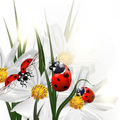 háttér, vektor táj kozmosz virágok és piros katicabogár