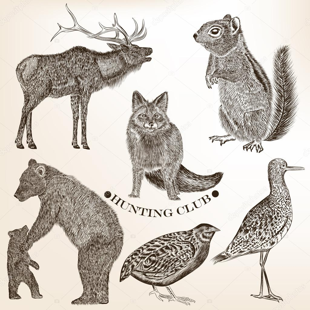 Collection of hand drawn vector animals in vintage style