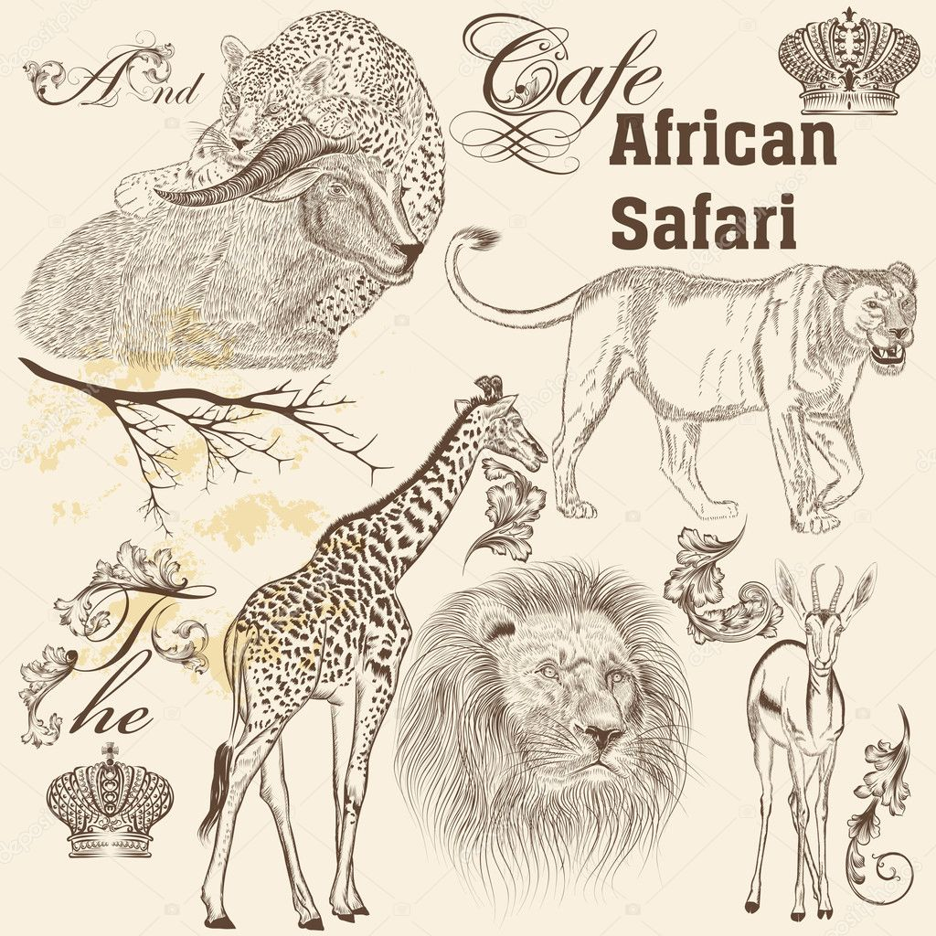 Collection of  vector  hand drawn African animals  in vintage st