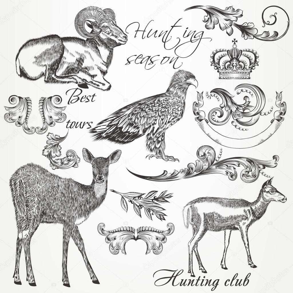 Collection of vector hand drawn animals and flourishes in vintag