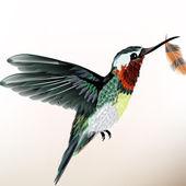 pozadí s barevnými kolibřík
