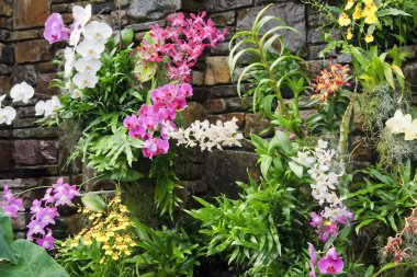 Wall of Orchids