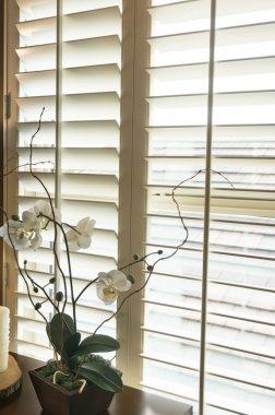 White plantation style wood Shutters