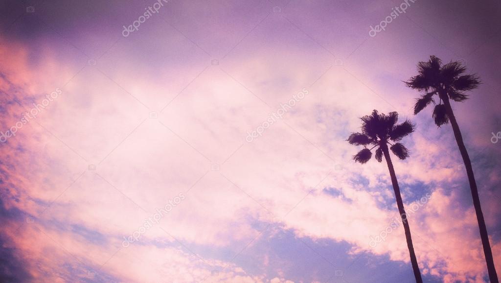 Romantic retro style palm tree sunset with palm tree