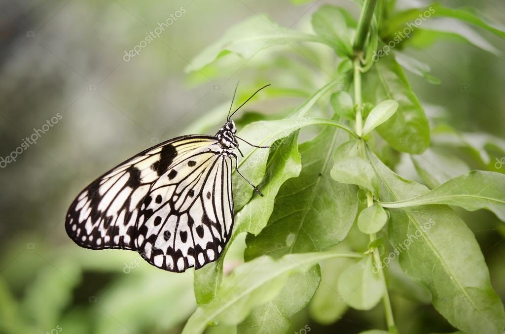 Butterfly with rays of light