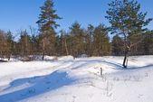 foresta dinverno