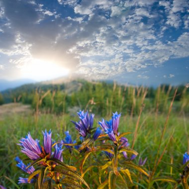 Flowers in a steppe at the early morning