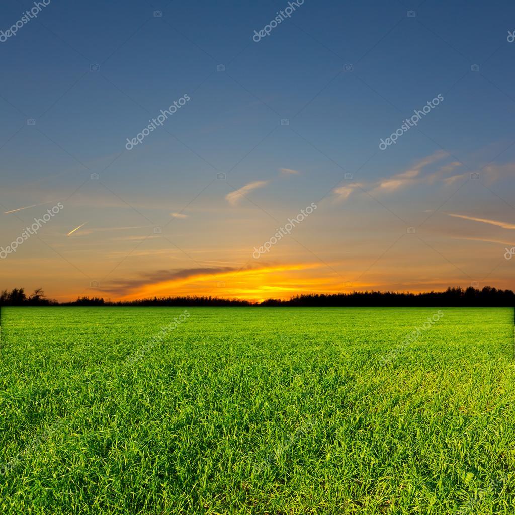 Evening rural scene