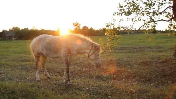 krásný kůň