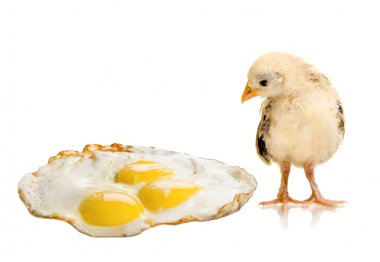 Hicken nestling and hen's-eggs
