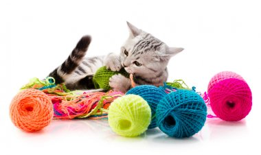 Kitten with  many multi-coloured clew