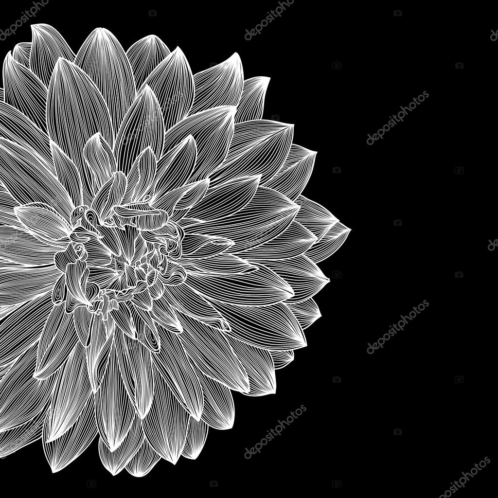 Black And White Card Design With Drawing Of Dahlia Flower Stock