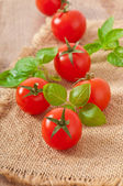 Fotografie Freshly harvested summer cherry tomatoes on wooden background