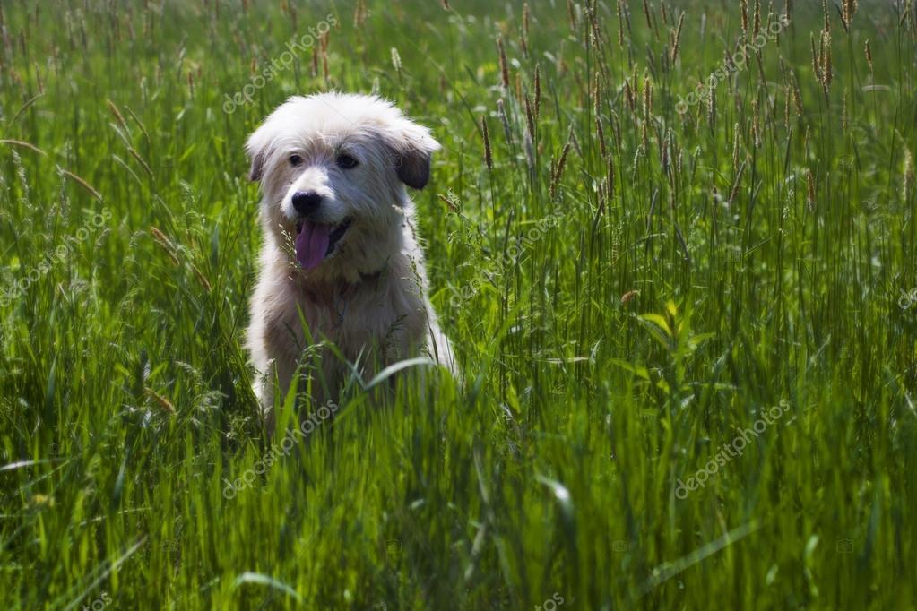 Cute dog in tall green grass