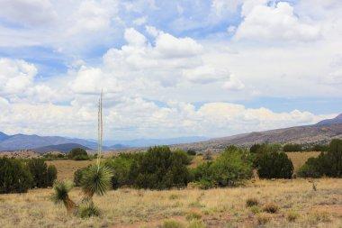 A Scenic View from Aldo Leopold Vista
