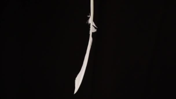 galamb toll a fekete háttér