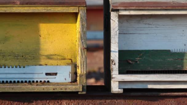 med včelí úly