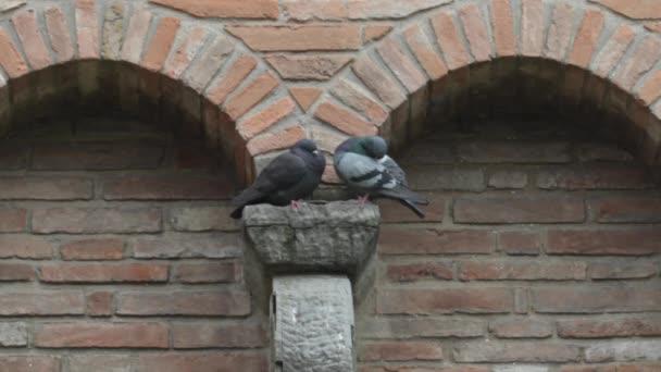 Pigeon on house