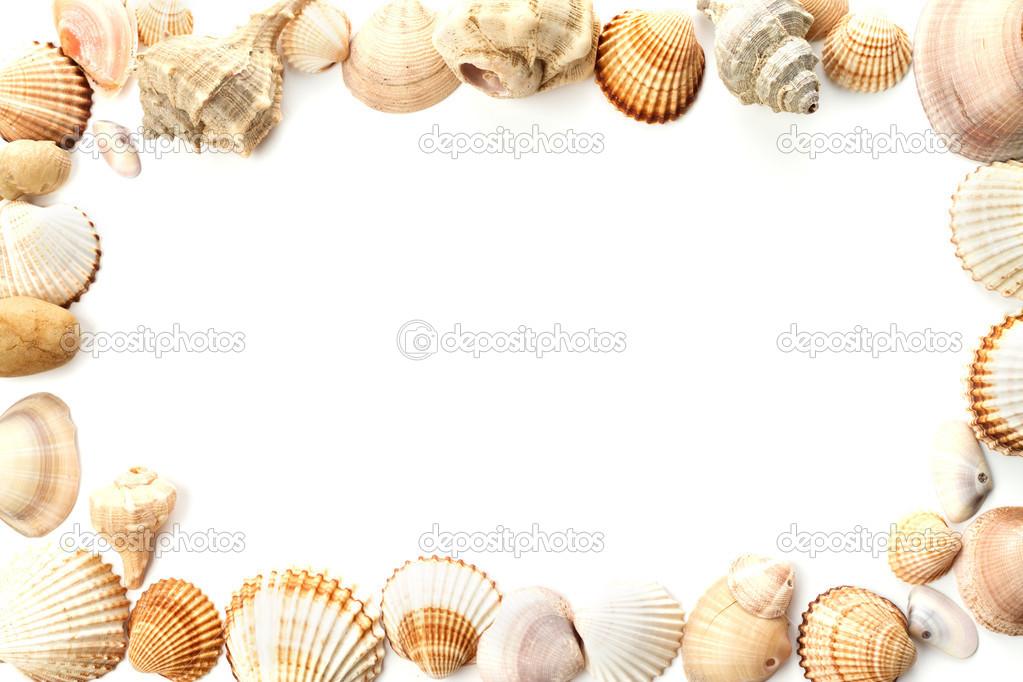 Cornice Di Conchiglie Di Mare Conchiglia Foto Stock