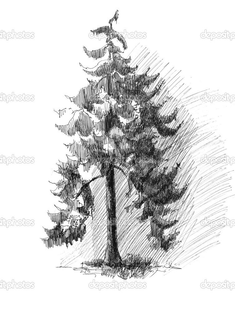 Borovice Strom Skica Kresba Stock Fotografie C Jainaproudmoore