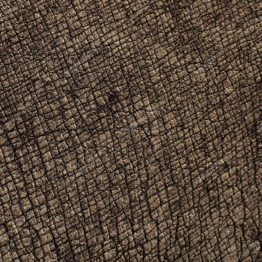 Rhino skin textures — Stock Photo © kongsky #46062089