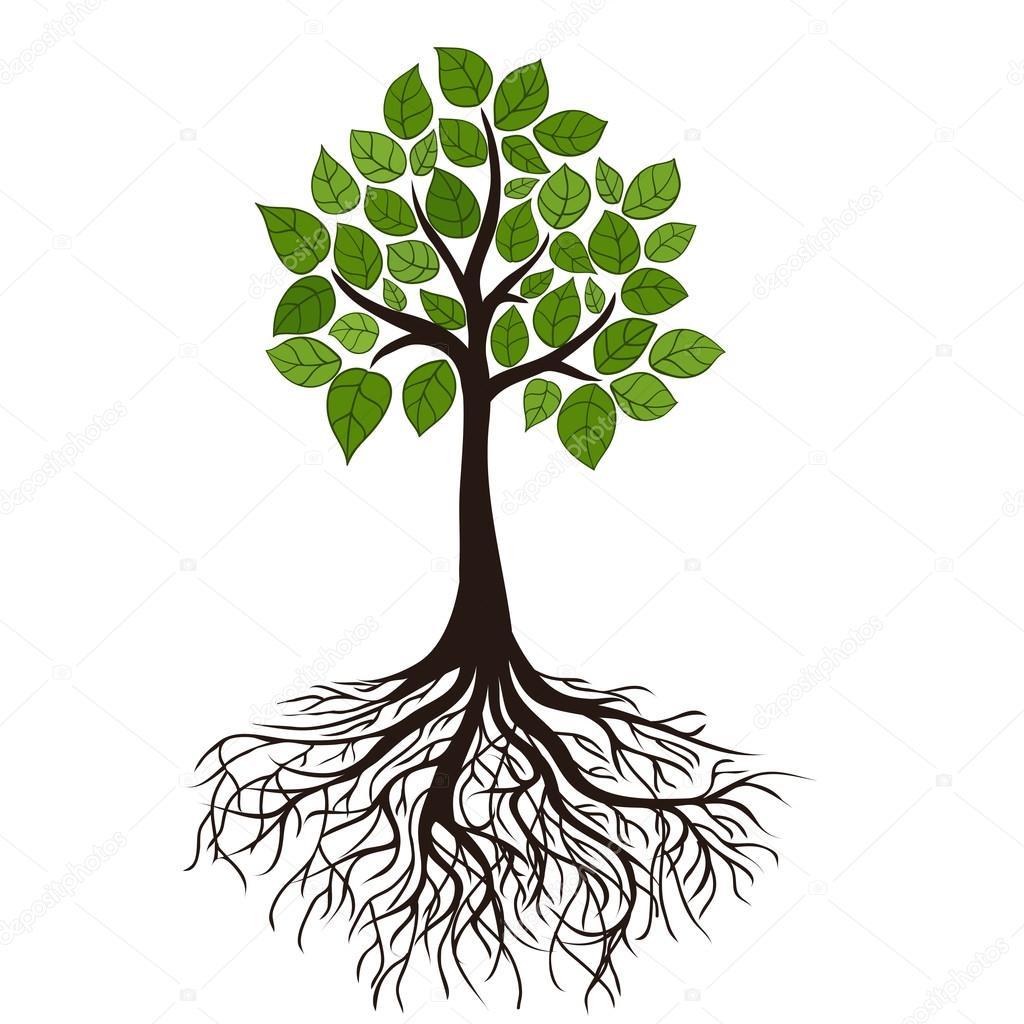 Arbre Avec Racine arbre avec des racines — image vectorielle nikitinaolga © #22552457