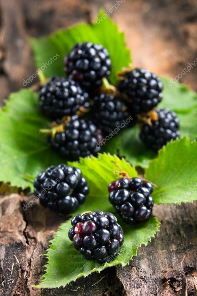 Ripe blackberries on bark in the forest
