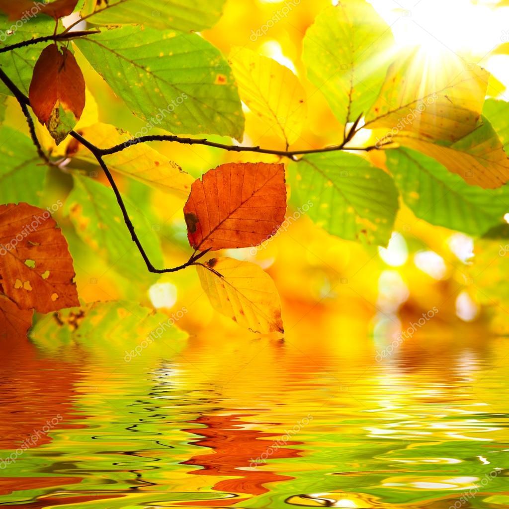 Rama oto o hojas reflejada en el agua foto de stock - Descargar autumn leaves ...
